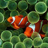 reefrunner