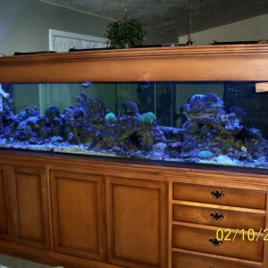 Our little tank room divider