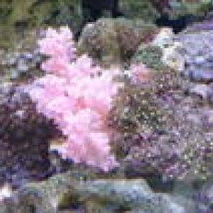 Close up of our corals