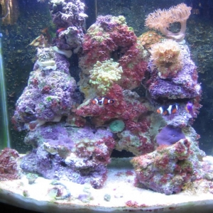 My tank as of May 2010
