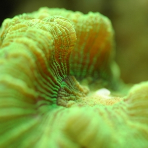 close up corals
