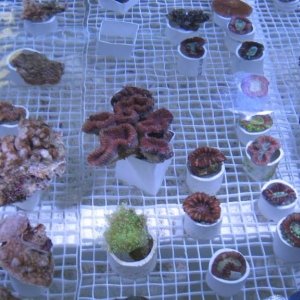 Exotic Reef Imports