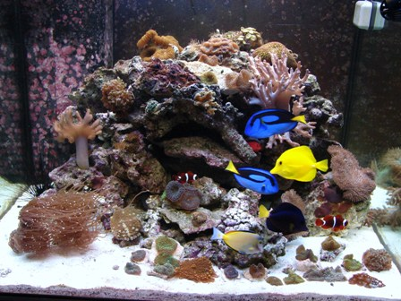 150 gallon marineland series