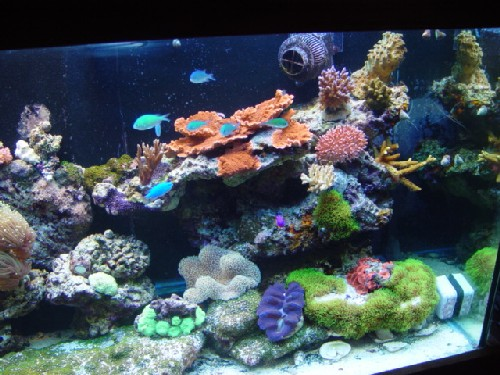 150 gallon reef
