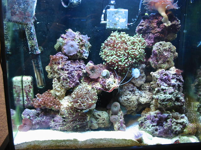 18 GAL Mini Reef