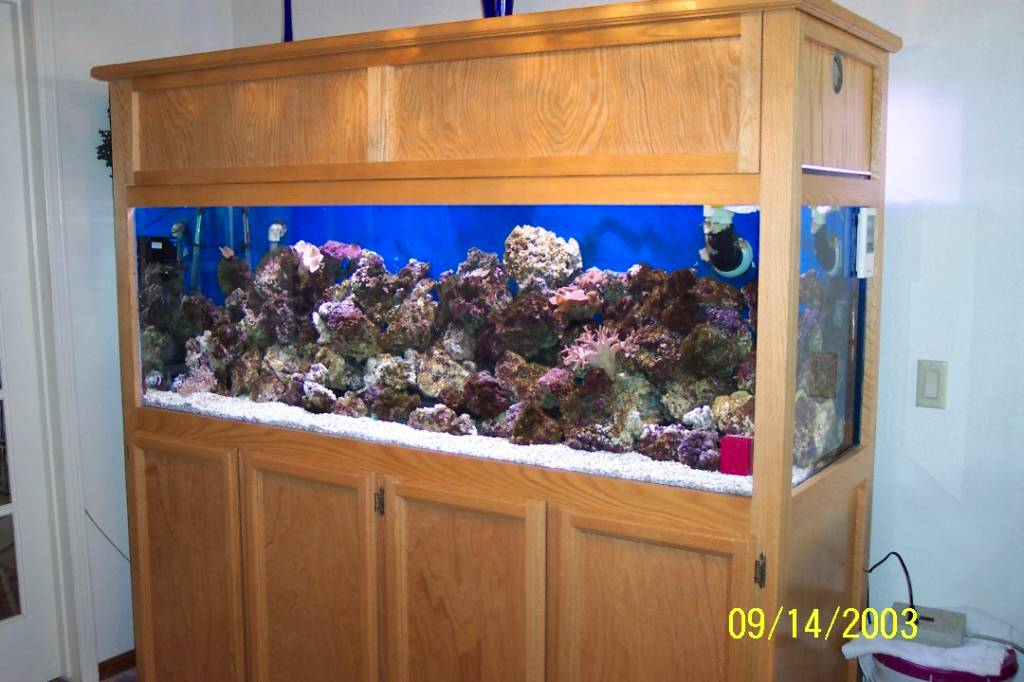 180 gallon semi-reef
