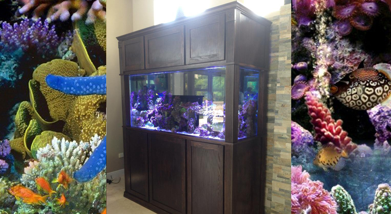 250 Gallon Aqurium