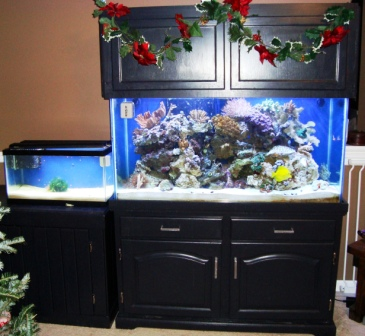 90 Gallon Reef Tank