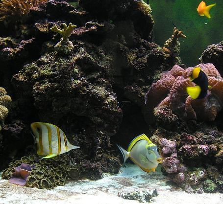 Aquarium_September_2007_014