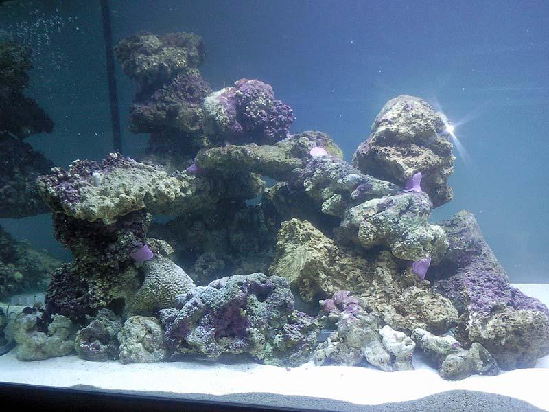 Aquascaping Reef Sanctuary