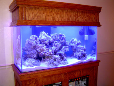 Drill Sergeant's 90-Gallon Reef After Cycle Compete