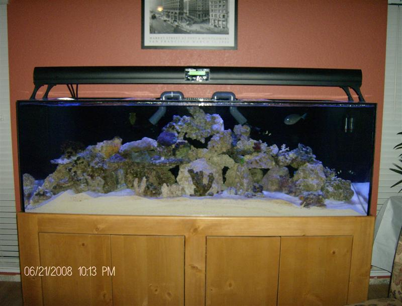 Fish & Coral into new tank