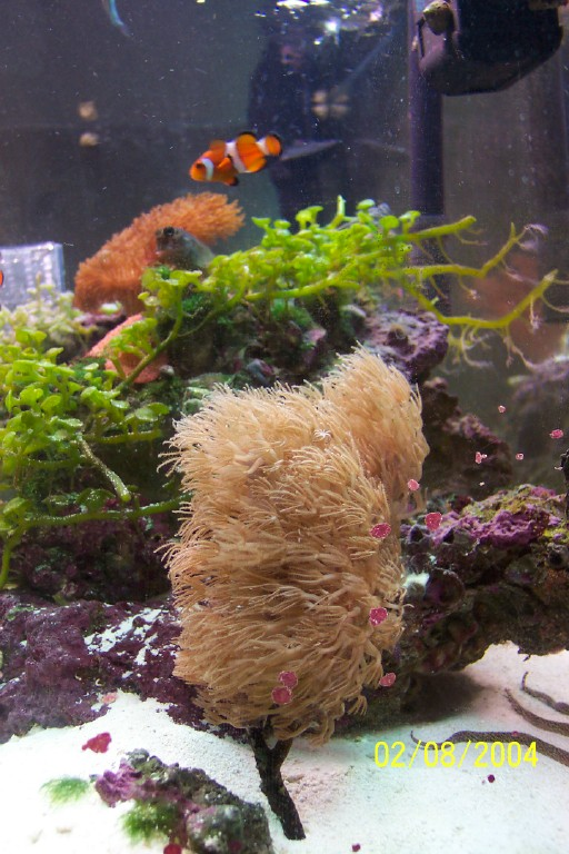 Gorgonian and BoBo the Clown