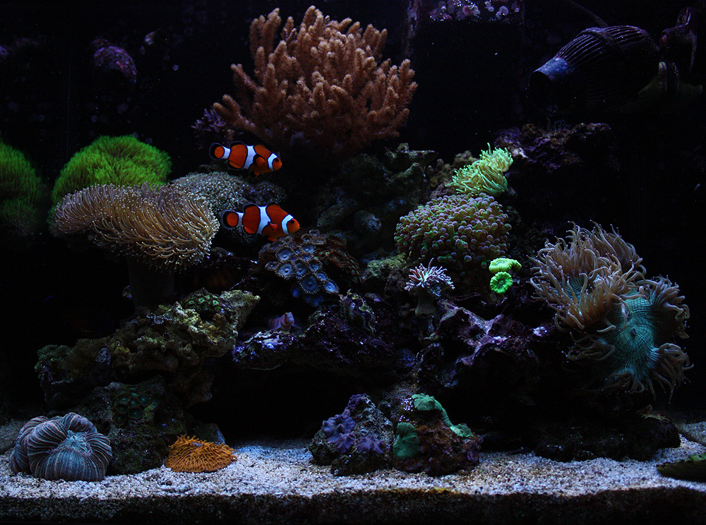 Live Rock Aquascape
