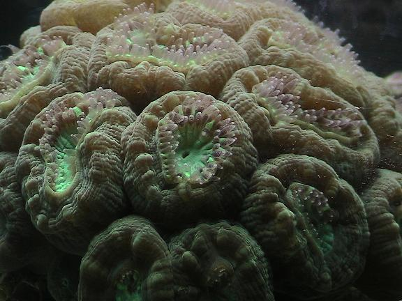 Moon_coral_rs
