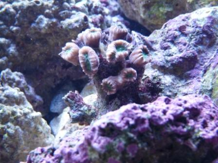 More of my corals