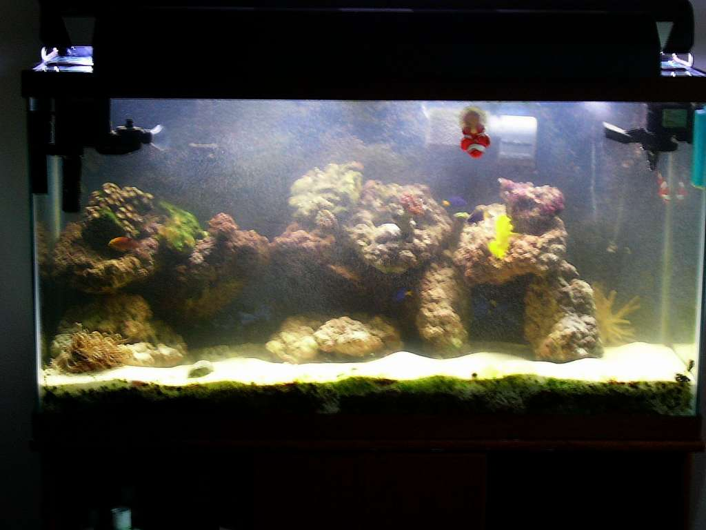 My 40 Gallon Reef Tank