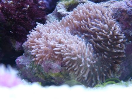My corals and inverts