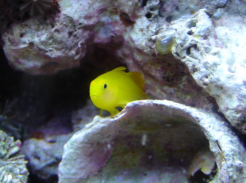 My New Clown Goby