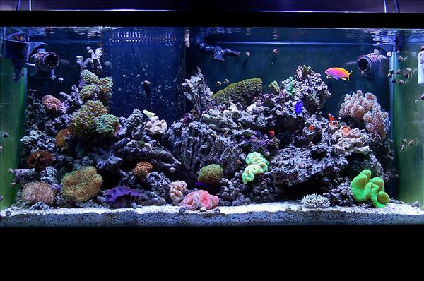 New Carpet Tank Shot