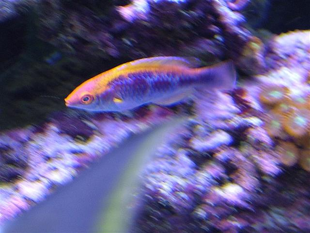 new wrasse ;)