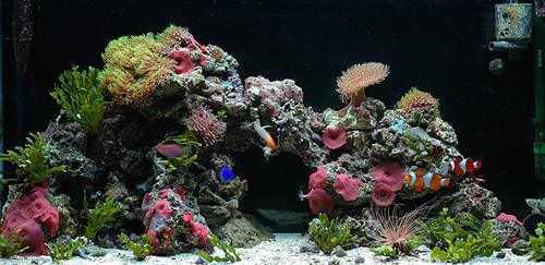 Raf and Diana's 33 gal nano reef