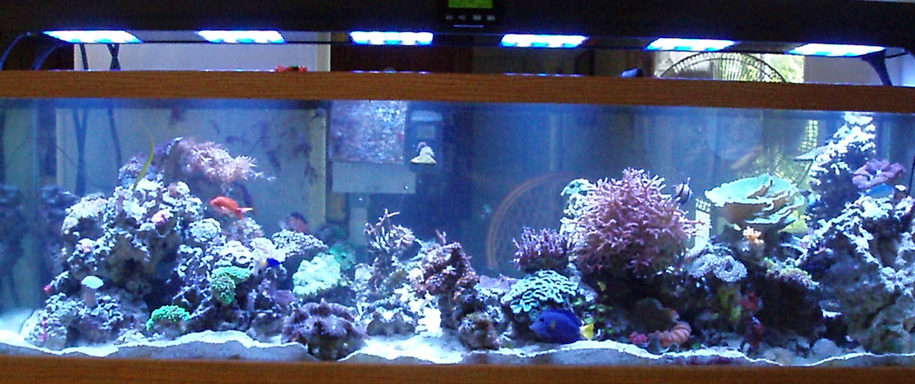 Reef with LED's