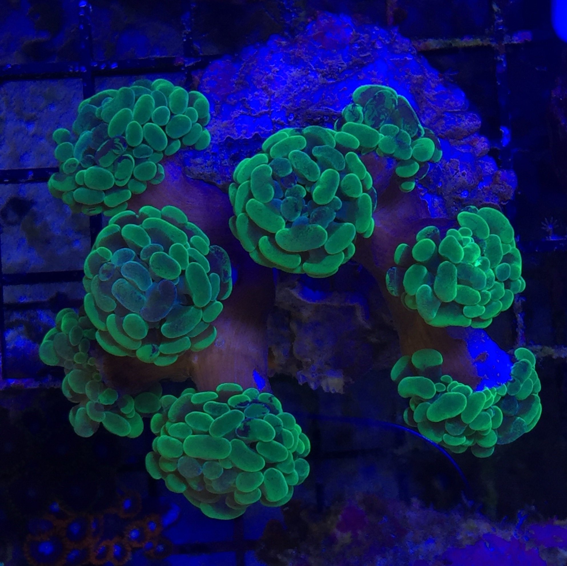 Saltwater Aquarium Jupiter Florida