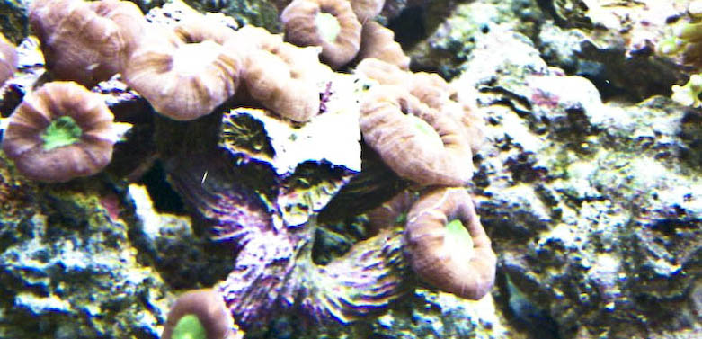 Some of my Corals