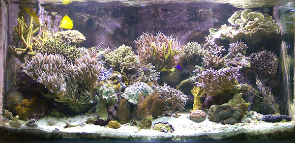 Some old pictures of my tank