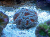 th_Aquarium016_edited