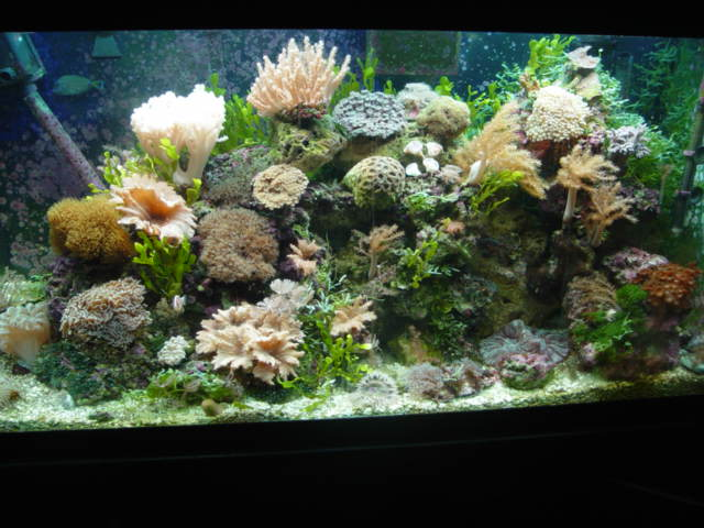 This is my 120 reef