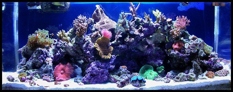 Tigahboy's 30g mixed reef.