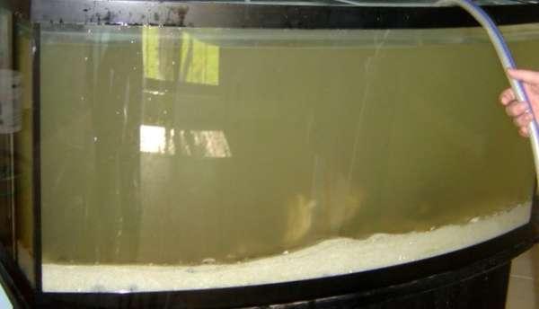 Dirty Aquarium Water